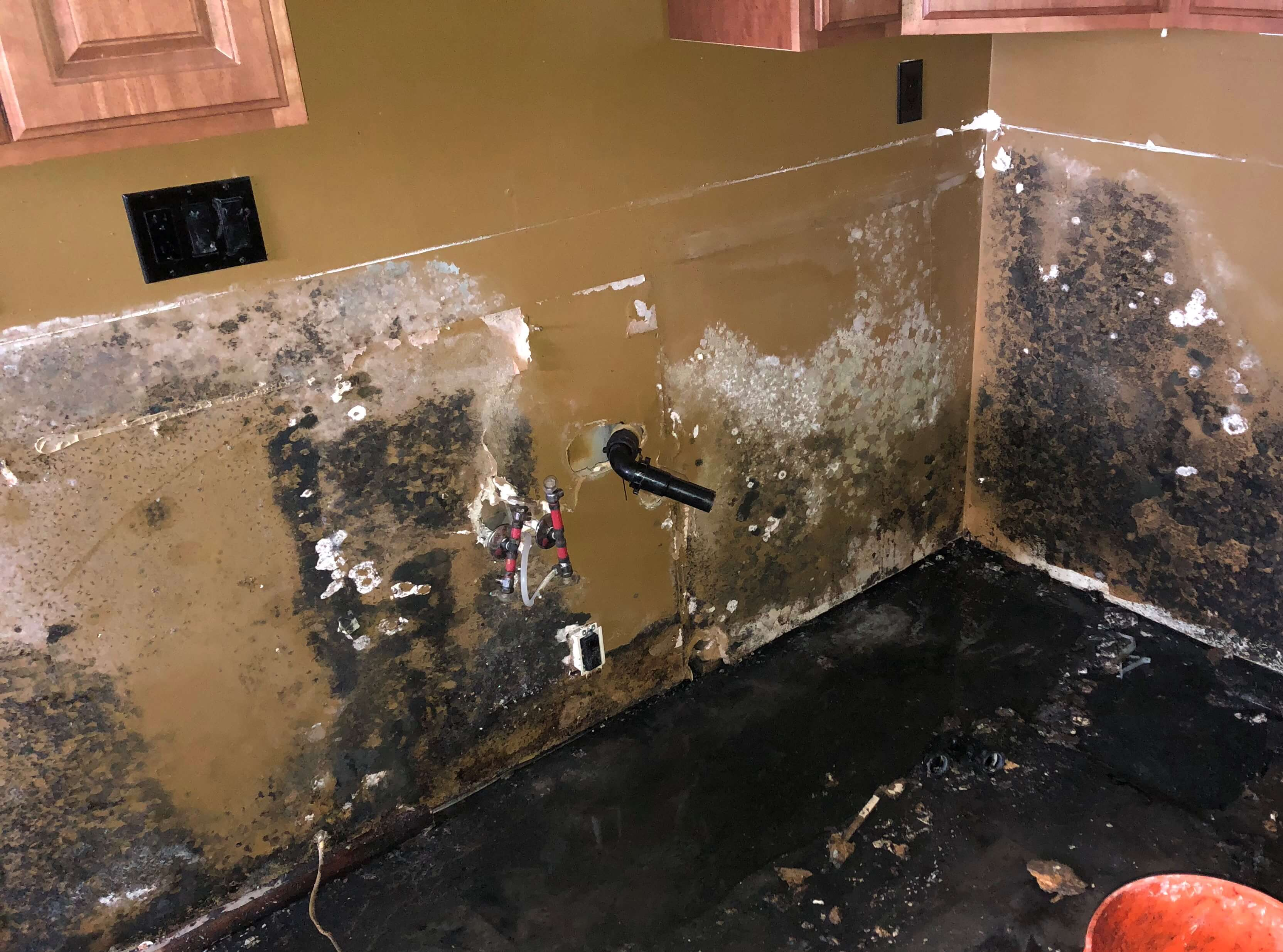 black mold in kitchen